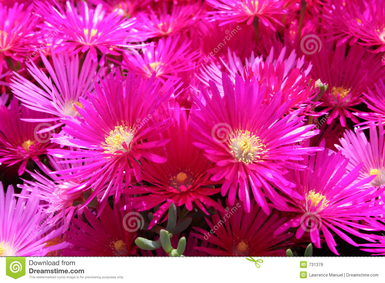 Bright Colored Flowers Stock Image Image Of Lawrence