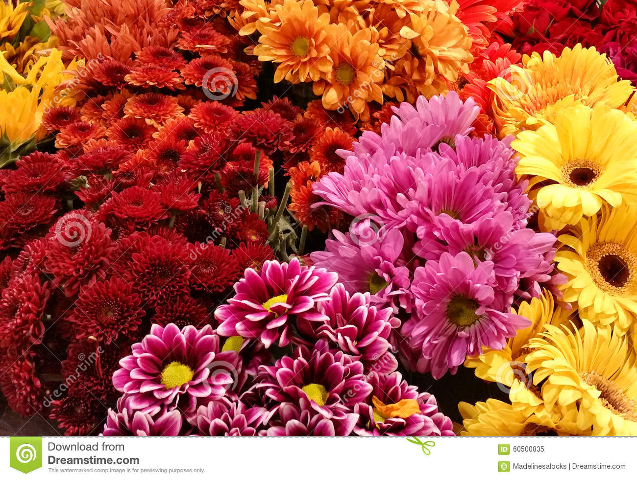 Bright Colored Flowers Stock Photos - 22,290 Images