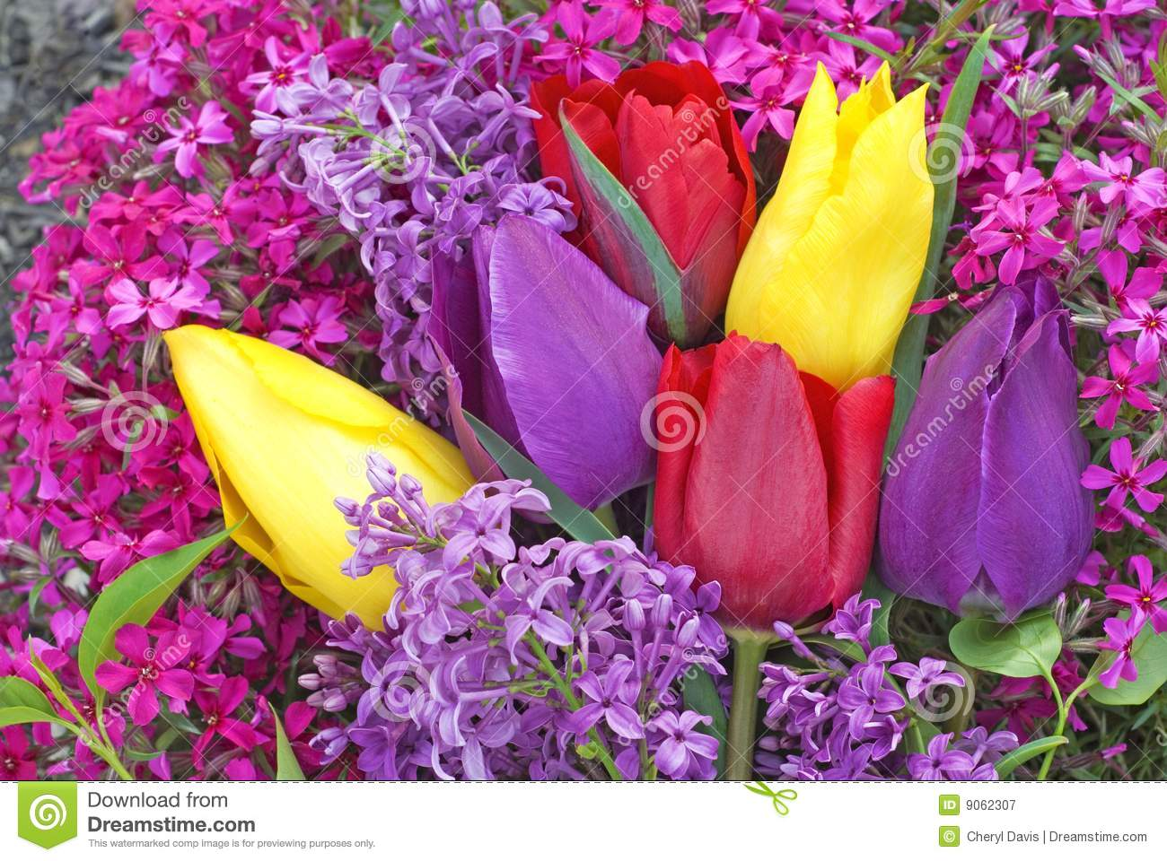 Bright Colored Tulips And Spring Flowers Stock Image Image Of