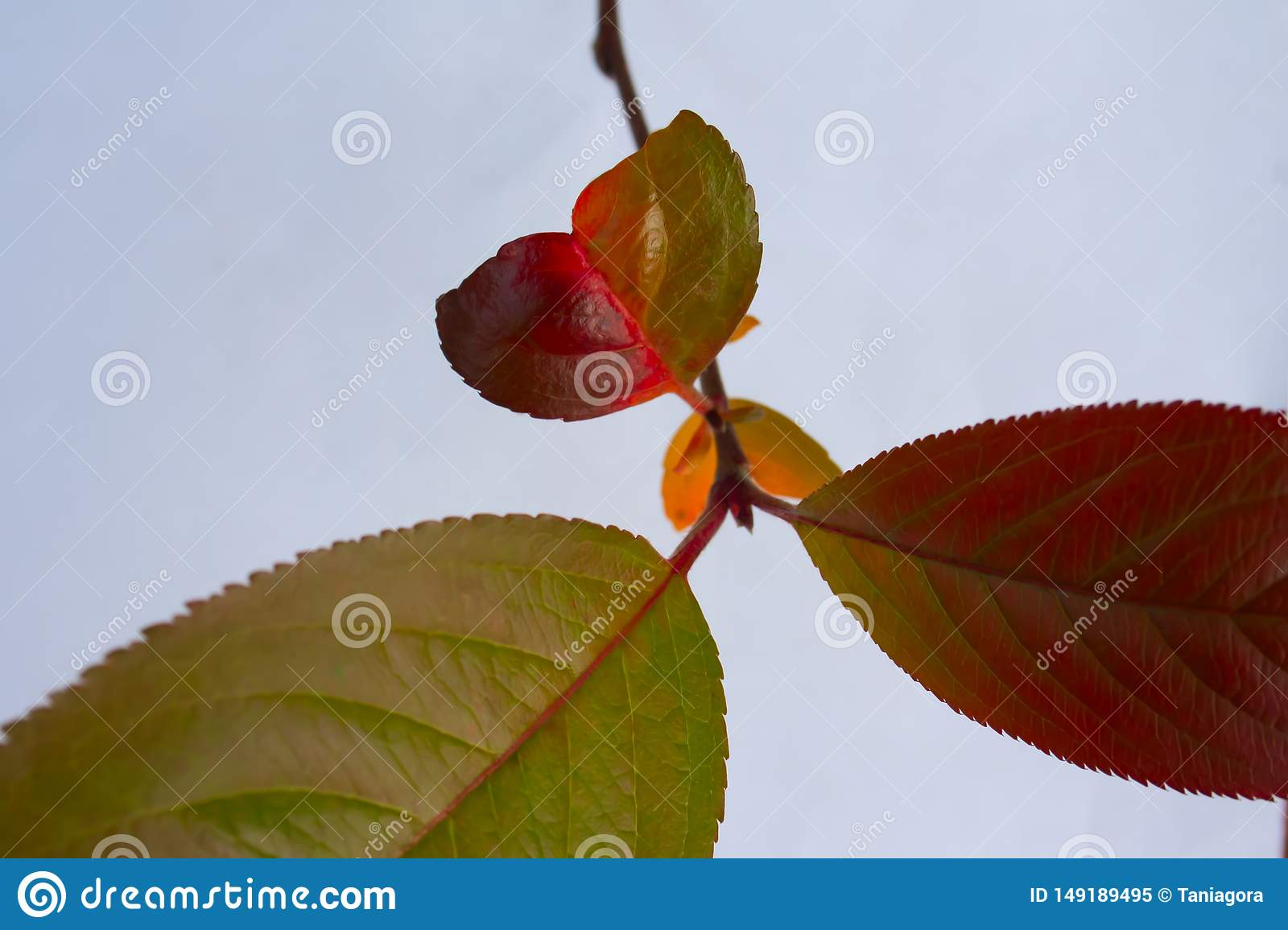 Bright colorful autumn twigs with a little leaf in the form of a heart