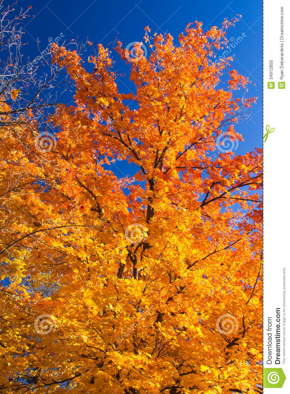Bright Colorful Fall Tree Leaves Stock Photo Image 34912850