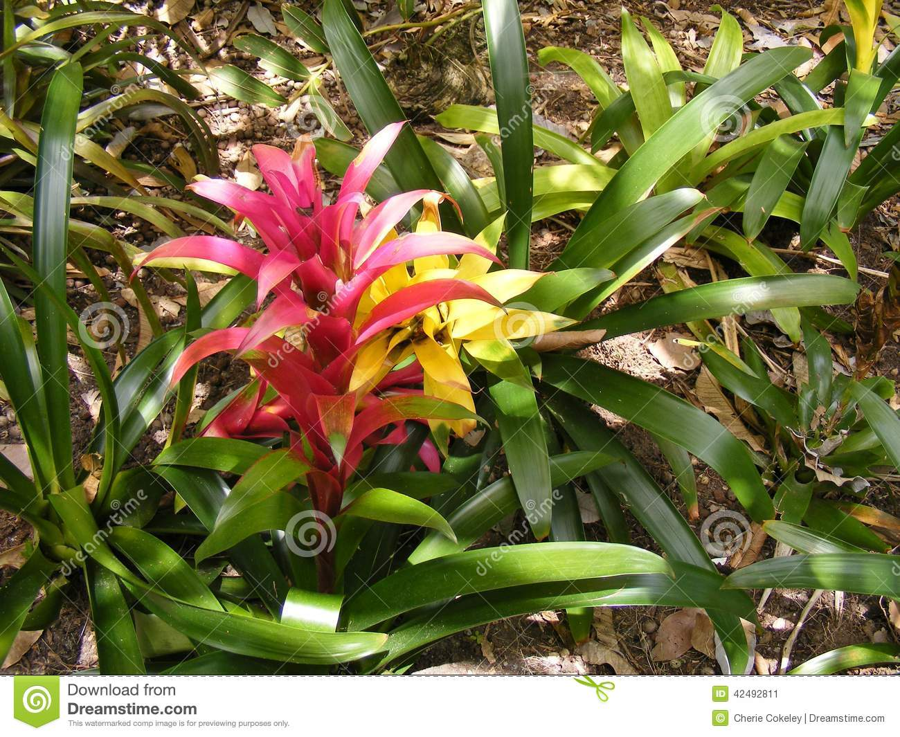 BRIGHT COLORFUL TROPICAL FLOWERS Stock Image - Image of landscape ...