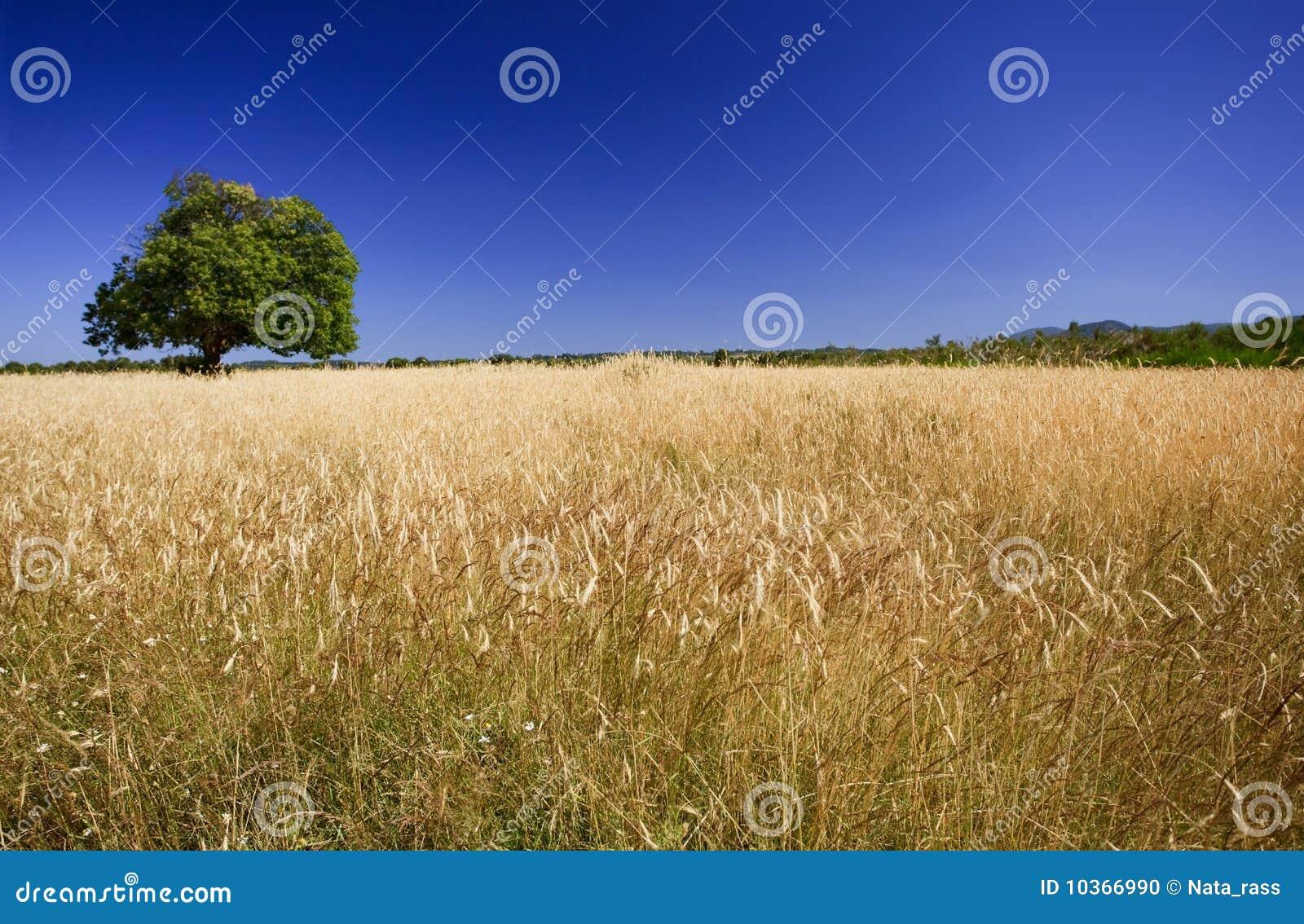 Bright colors of harvest season