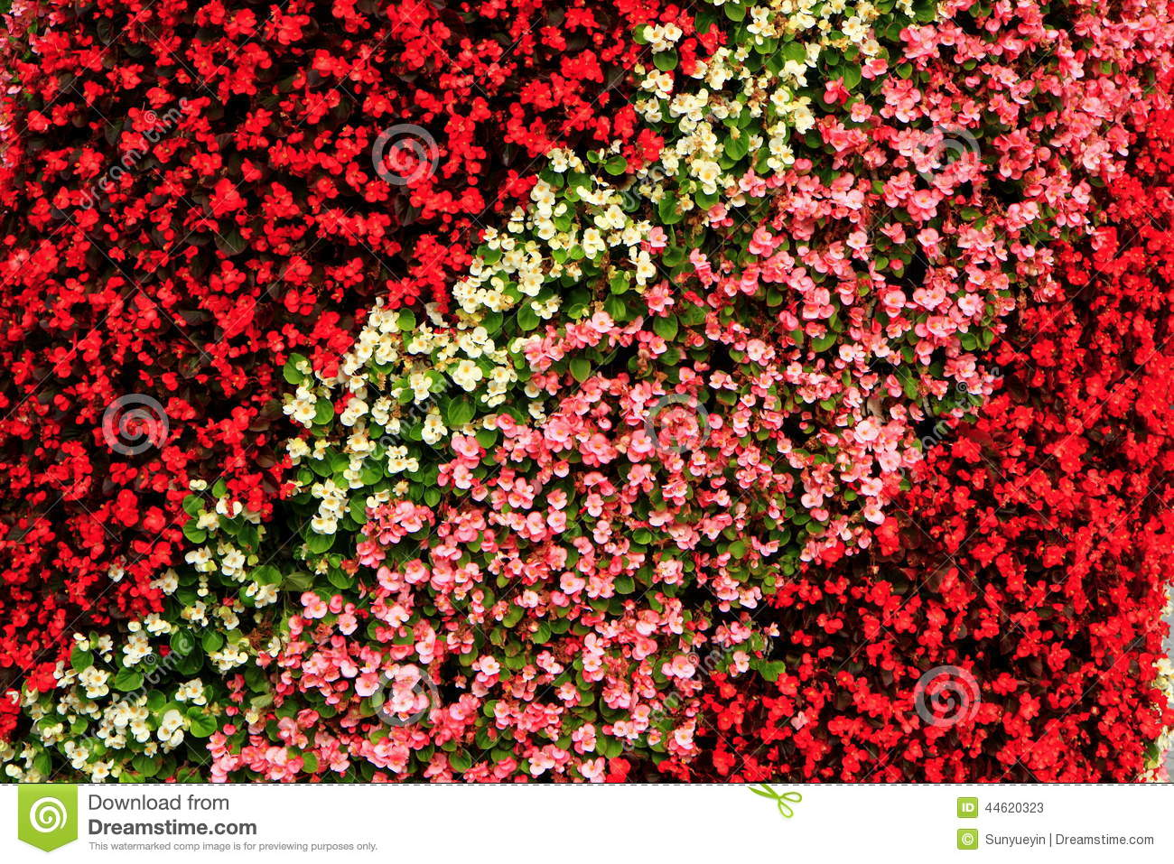 Bright-coloured Flower Bed(2)
