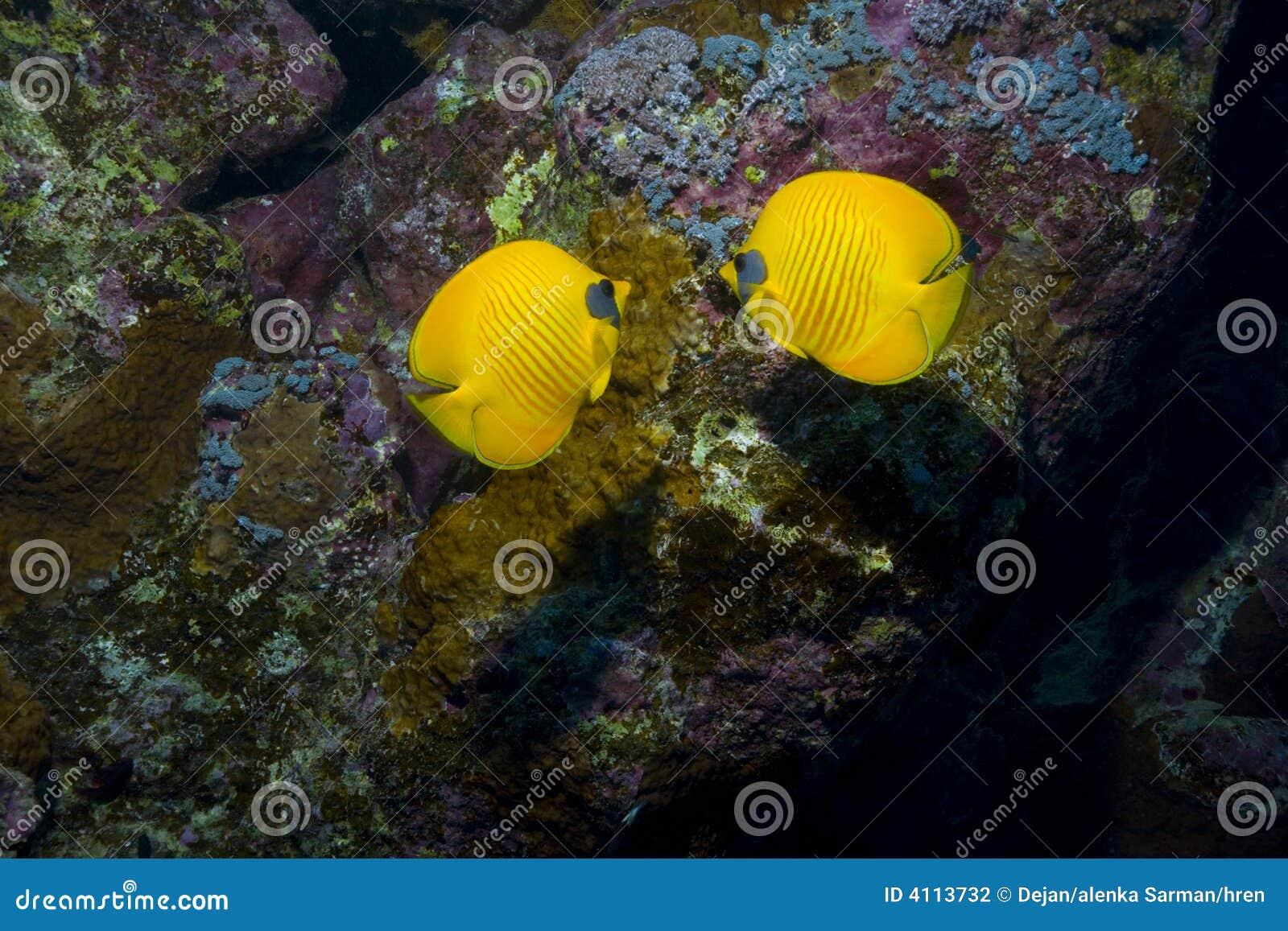 Bright fish among coral