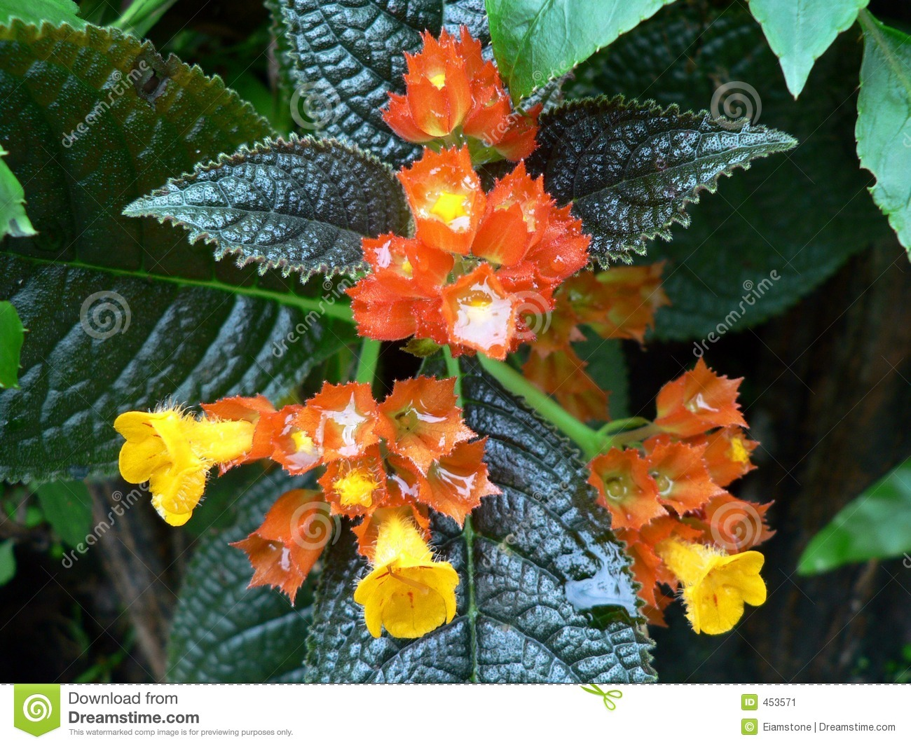 Download Bright Flower stock image. Image of flora, nature, yellow - 453571