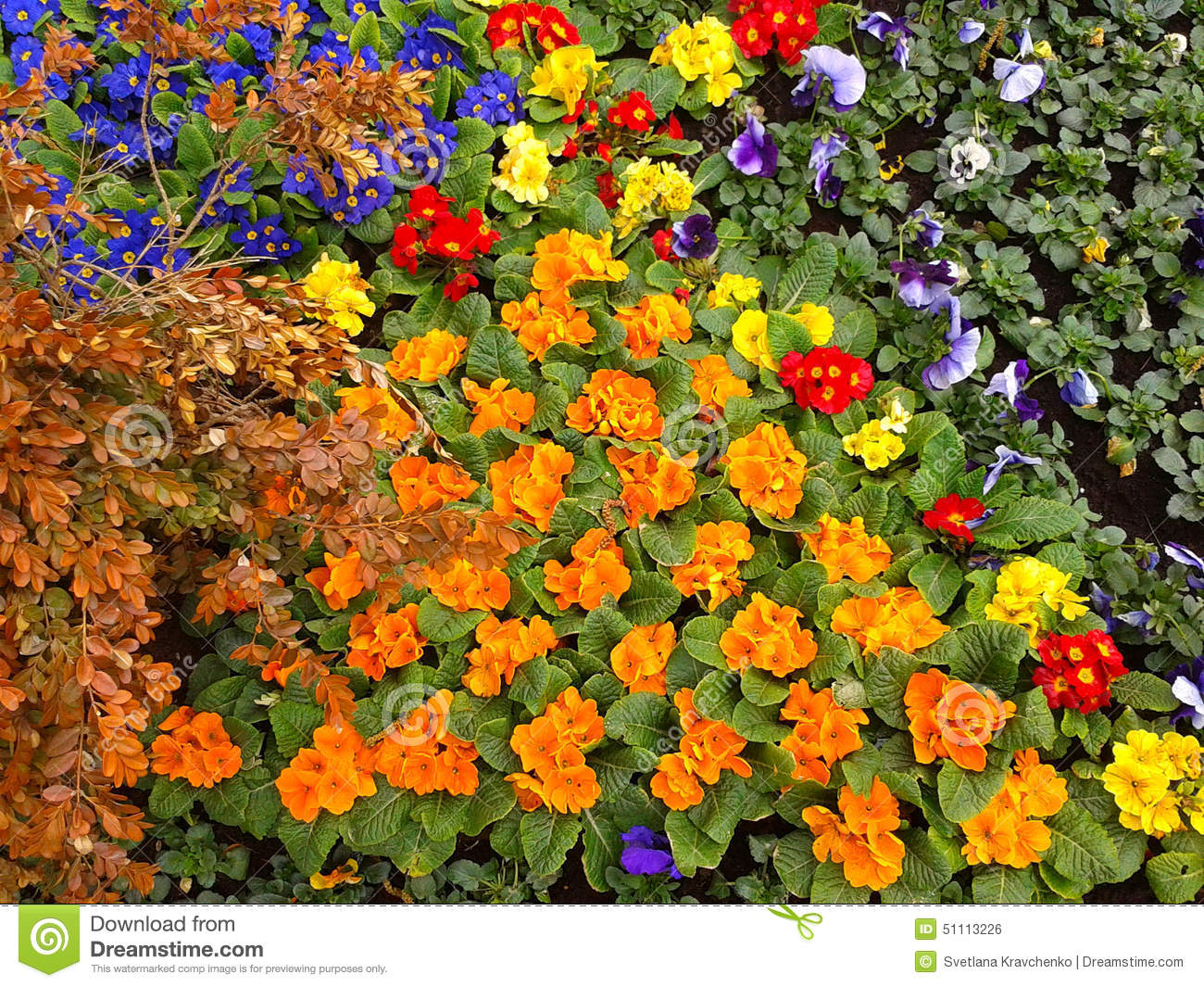 Bright flower beds, landscaping