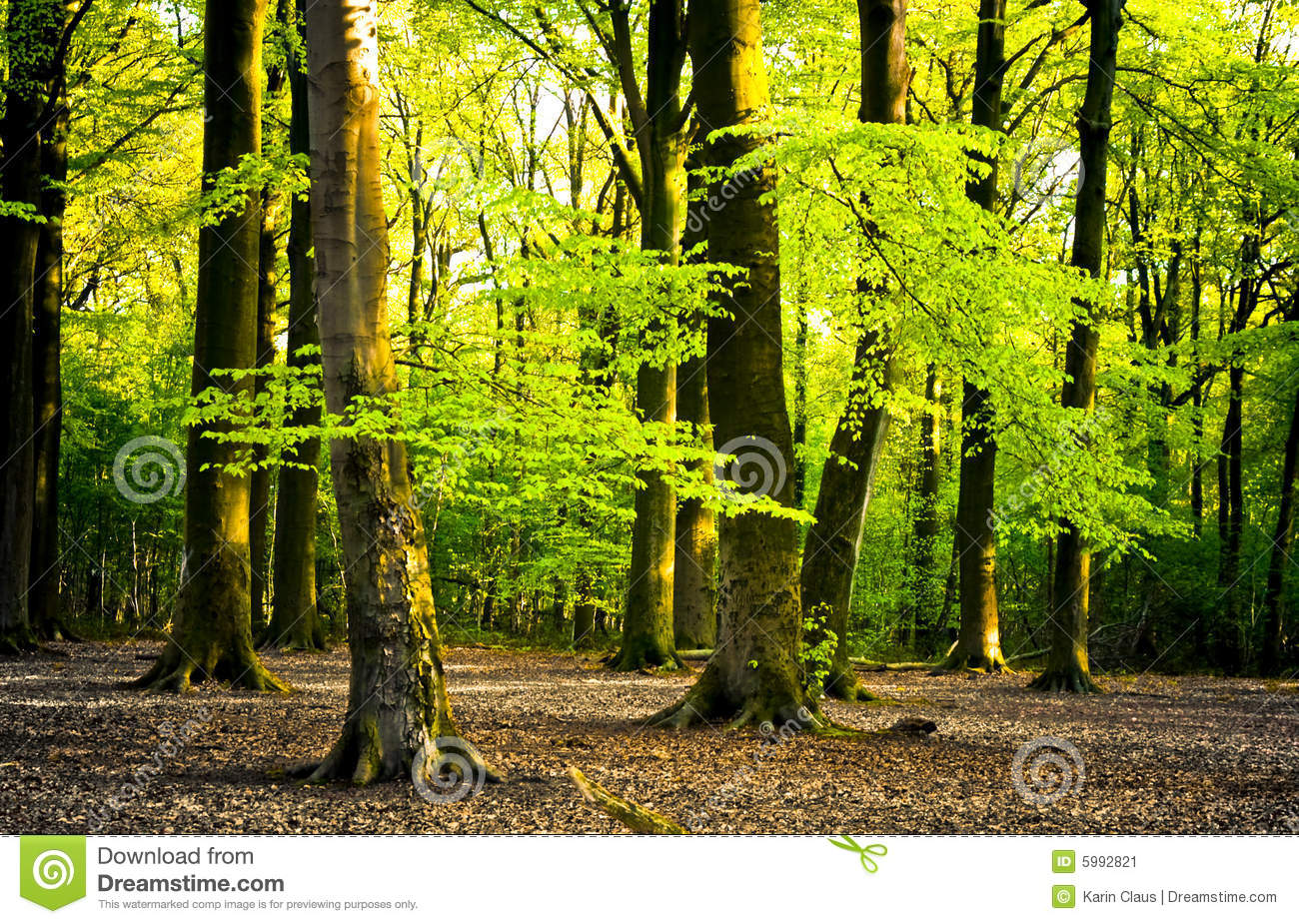 Bright Forest Stock Image Image 5992821