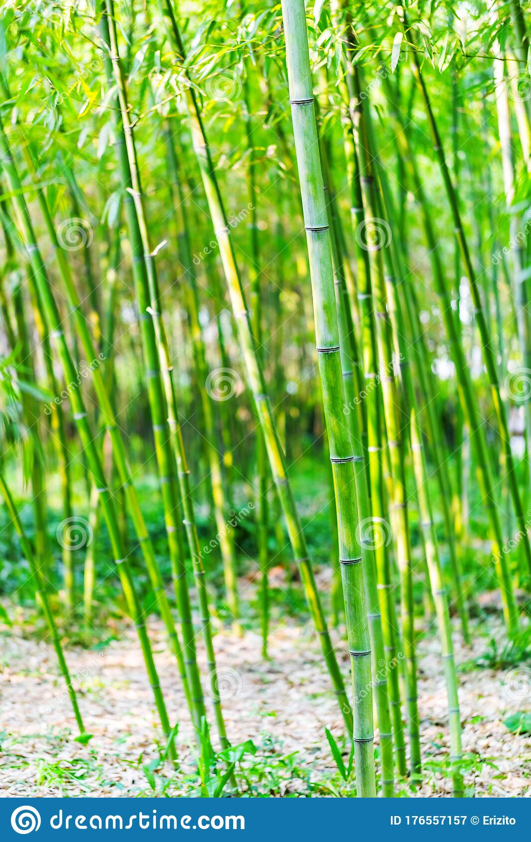 Bright Green Bamboo Stems And Leaves Background Stock Image Image Of Organic Jungle 176557157