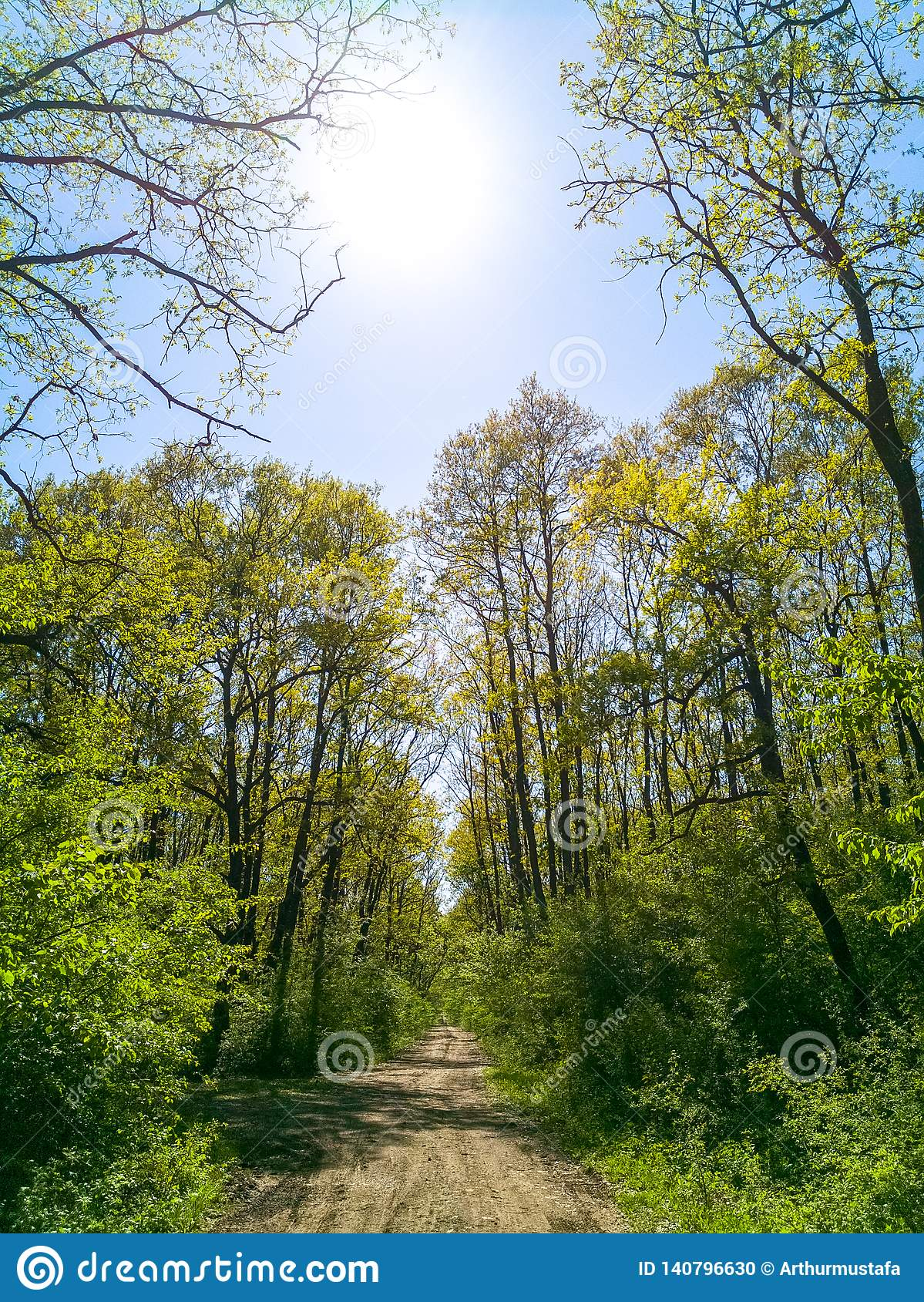 Bright green forest full of life under the spring warm sunlight. Tranquil background of spring nature, beautiful landscape of a