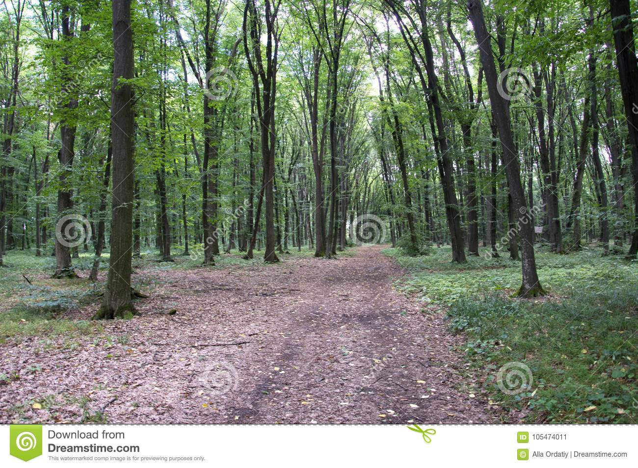 Bright Green Forest Natural Walkway In Sunny Day Light