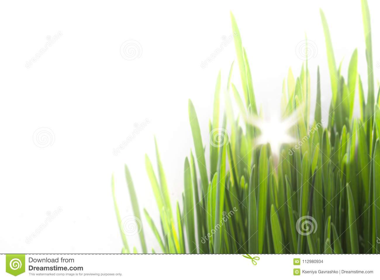 Bright Green Fresh Grass Isolated on White Background