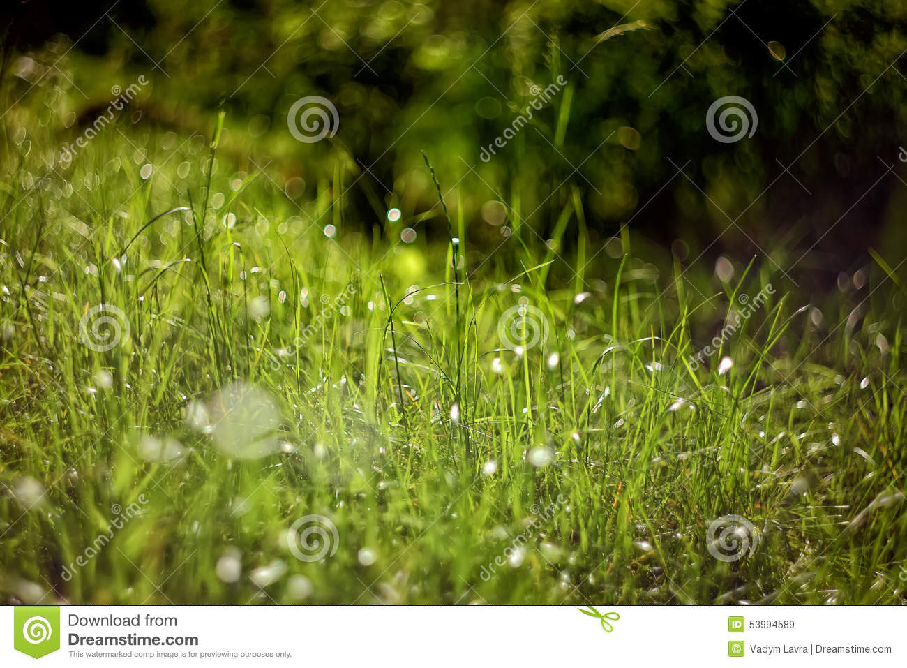 Bright green grass on background with beautiful bokeh for Pretty grass