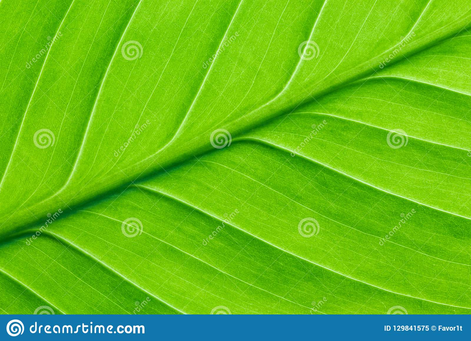 Bright green leaf of a plant close up