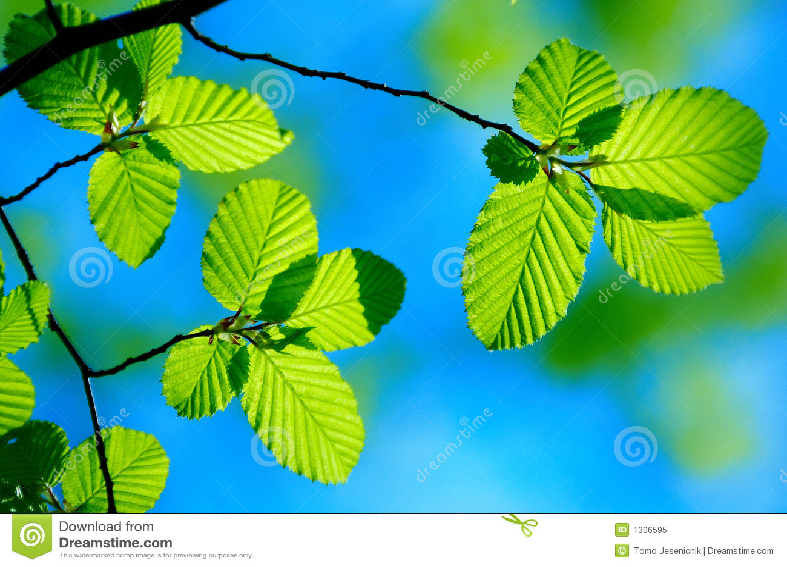 Bright green leafs