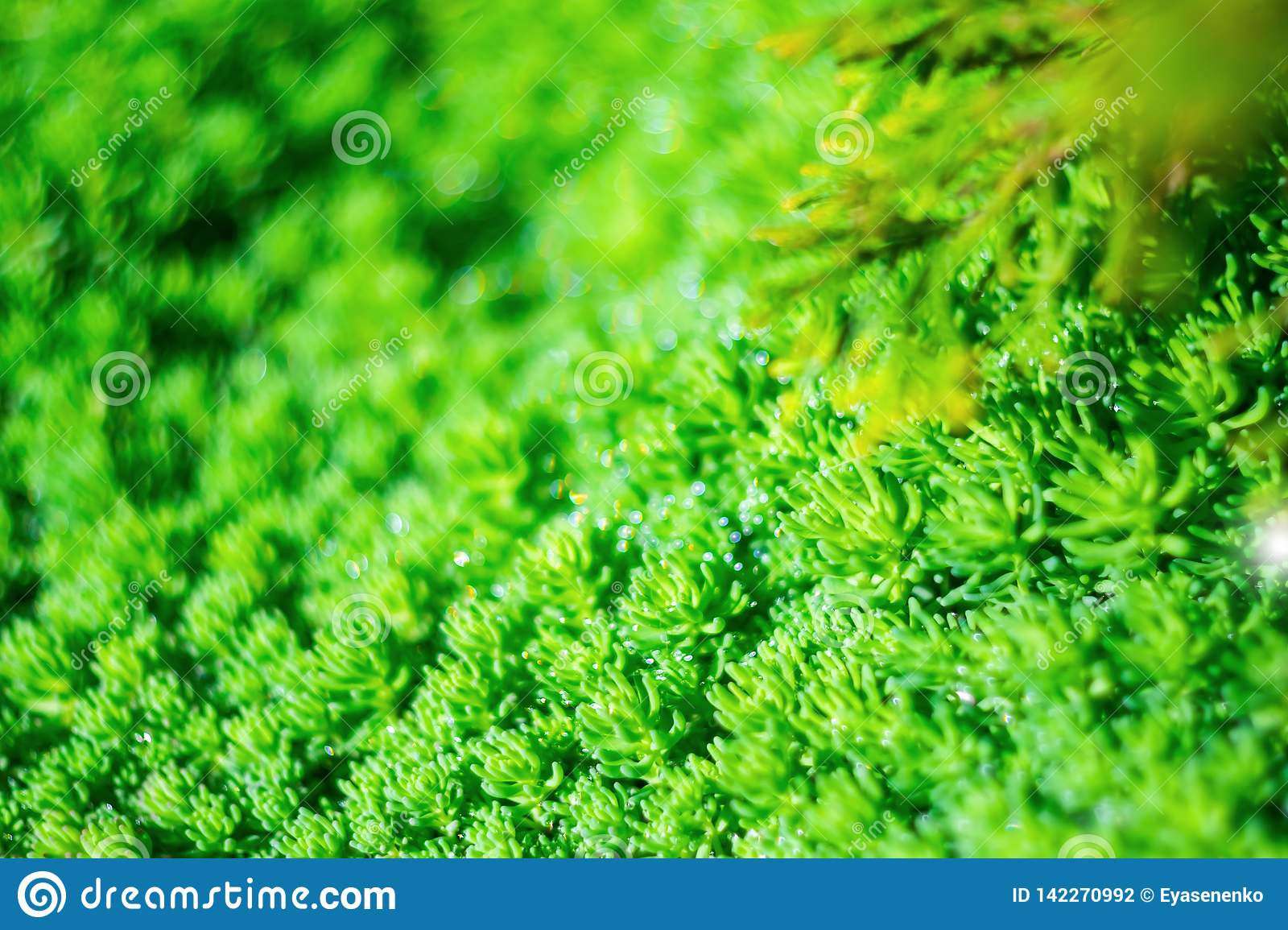 Bright Green Plant With A Beautiful Blur Effect Stock Photo Image Of Flora Freshness 142270992