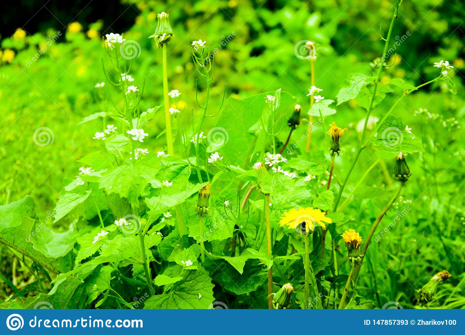 Bright Green Plants On The Lawn Stock Image Image Of Vegetable Flowers 147857393