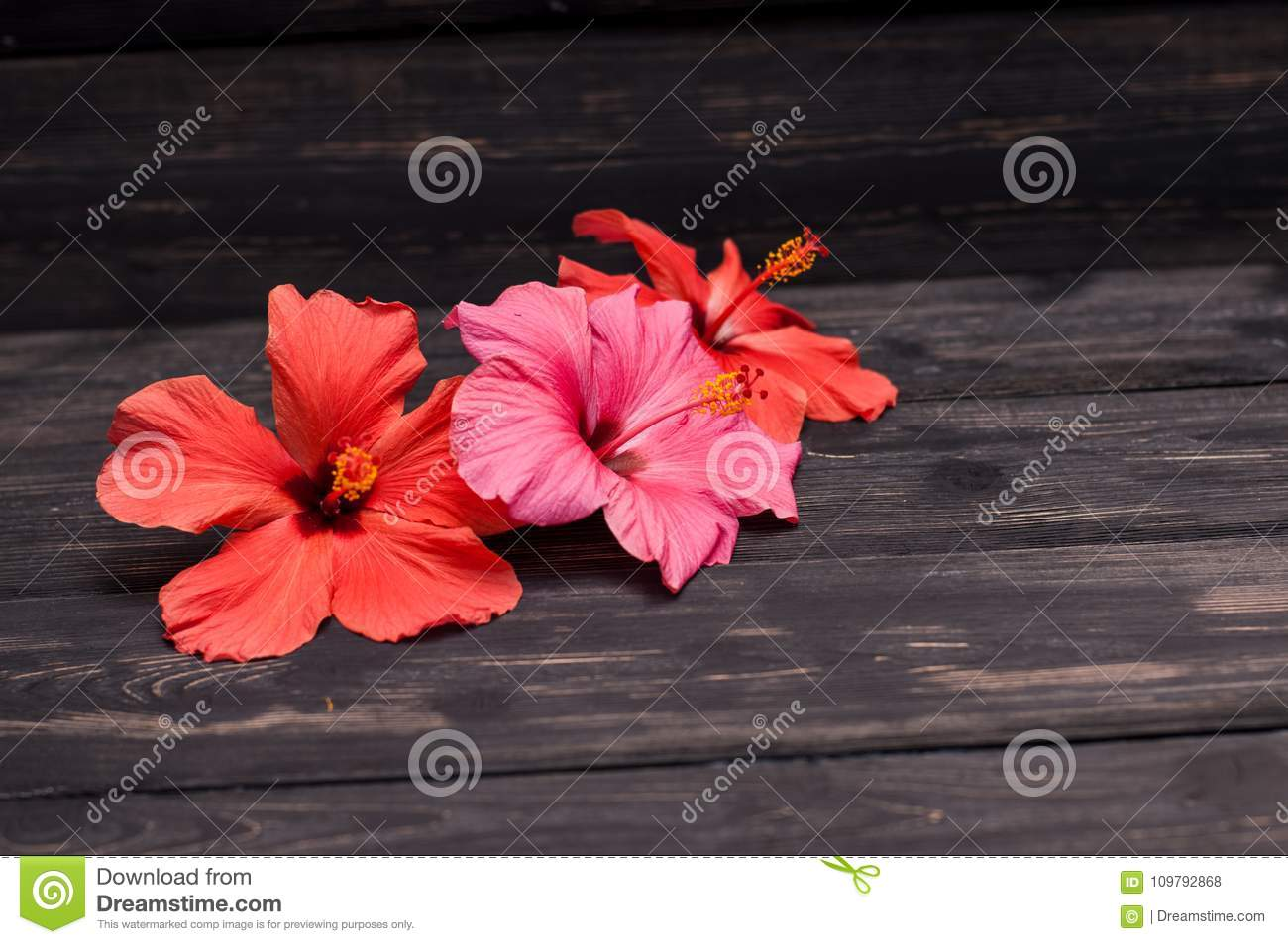 Hibiscus flowers on black boards stock photo image of floral hibiscus flowers on black boards floral ingredient royalty free stock photo download hibiscus flowers on black izmirmasajfo