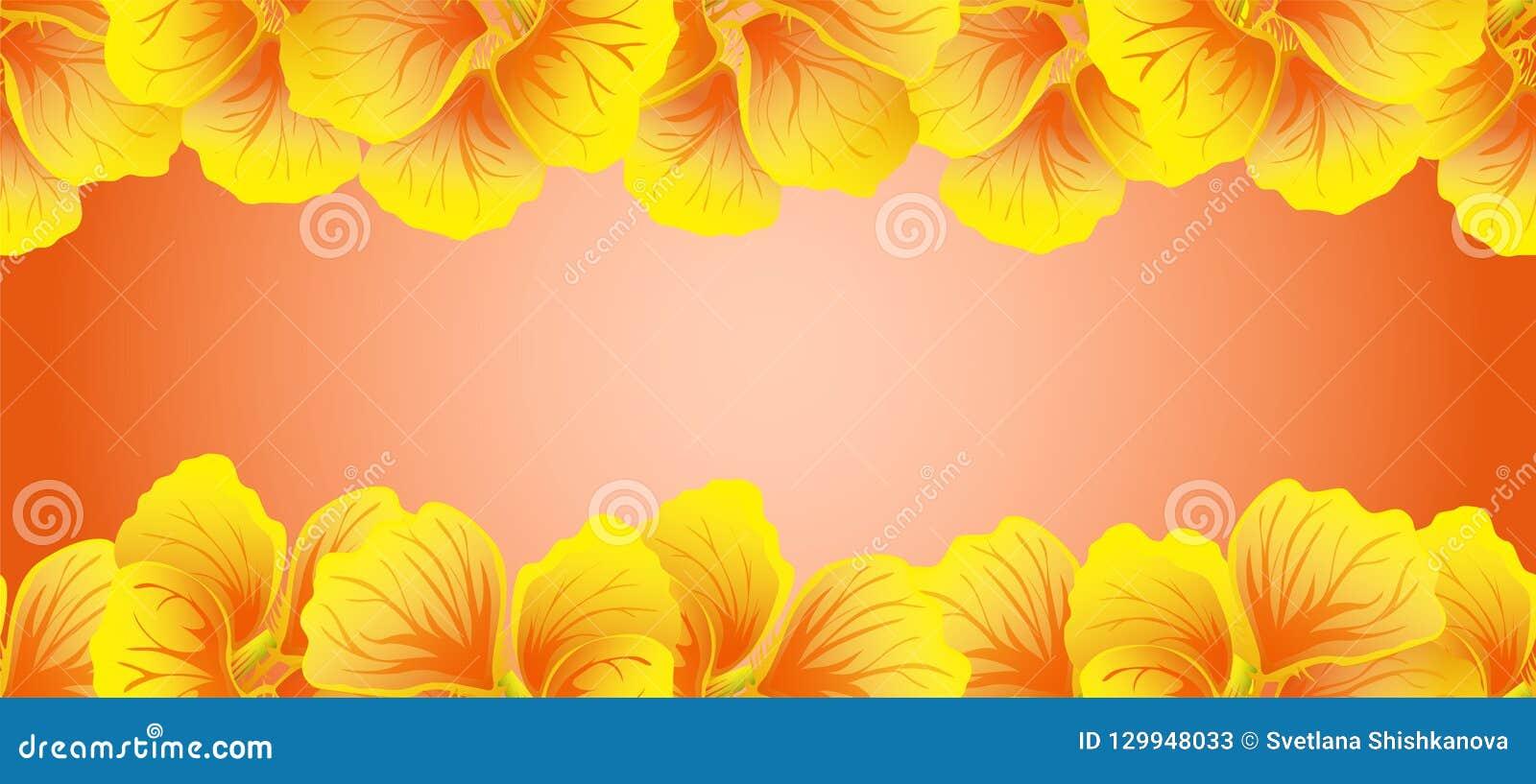 Bright Nasturtium Seamless border. Yellow flowers. Beautiful Horizontal banner. Red background. Card, invitation, poster, greeting