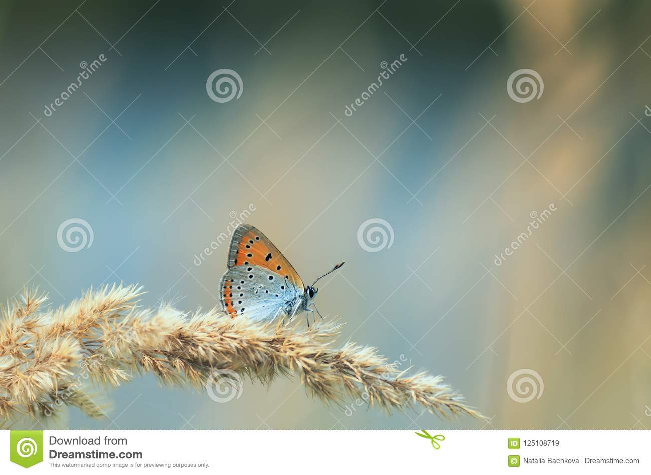 Bright orange butterfly sits on a summer field with a grass fea