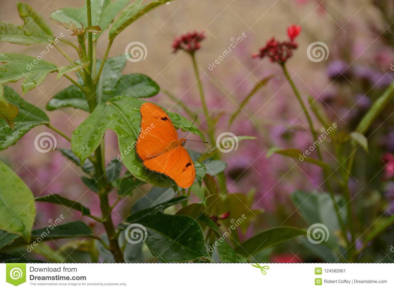 Julia Longwing Butterfly In The Garden Stock Image - Image of ...