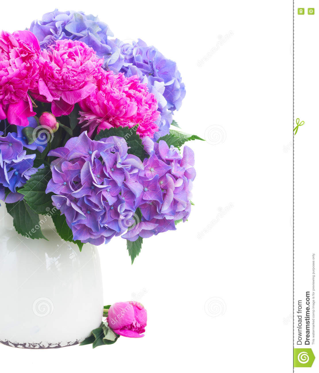 Bright Pink And Blue Flowers Stock Photo Image Of Peony Garden