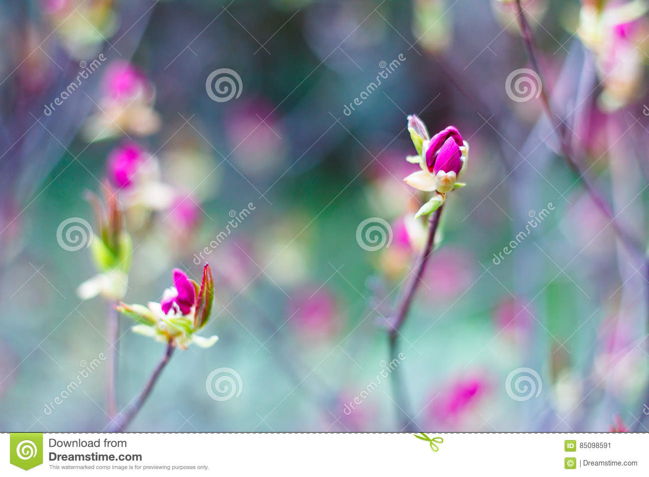 Bright pink buds of spring flowers on blurred background in blossom download bright pink buds of spring flowers on blurred background in blossom garden blooming tree mightylinksfo