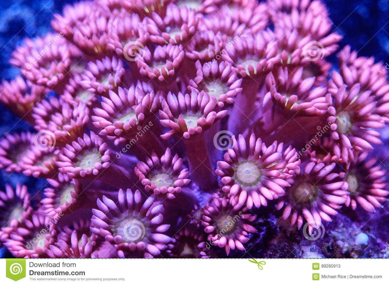Bright pink flower pot coral stock image image of detail bright pink flower pot coral mightylinksfo
