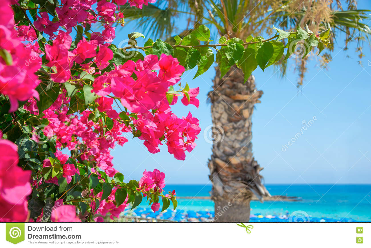 Bright pink flowers and the sea on the coast of cyprus stock image bright pink flowers and the sea on the coast of cyprus mightylinksfo