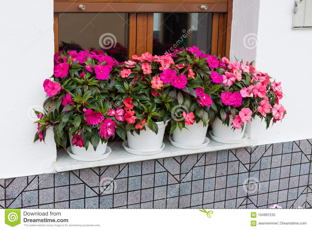 348 Guinea Impatiens New Photos Free Royalty Free Stock Photos From Dreamstime
