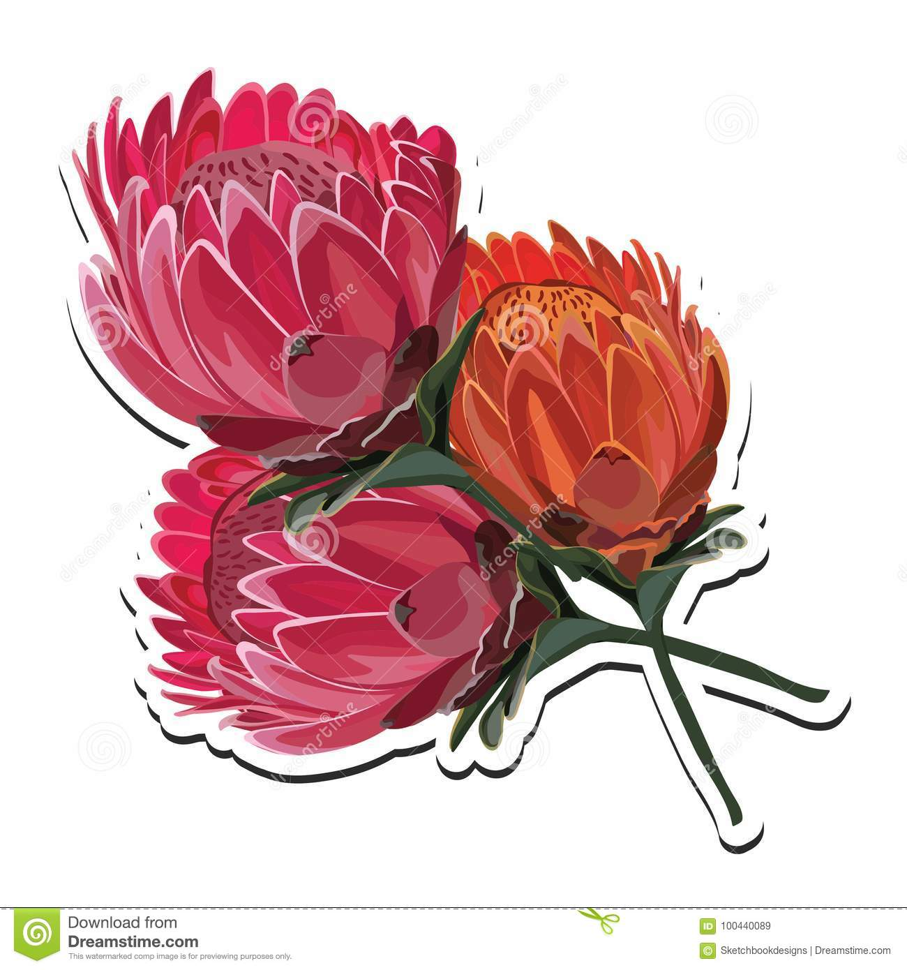 Protea Pink And Orange Flower Bouquet Vector Illustration Stock ...