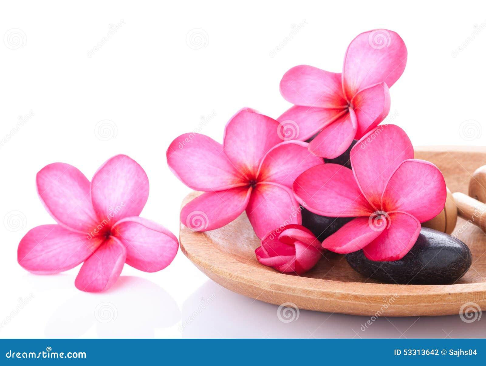Bright pink plumeria