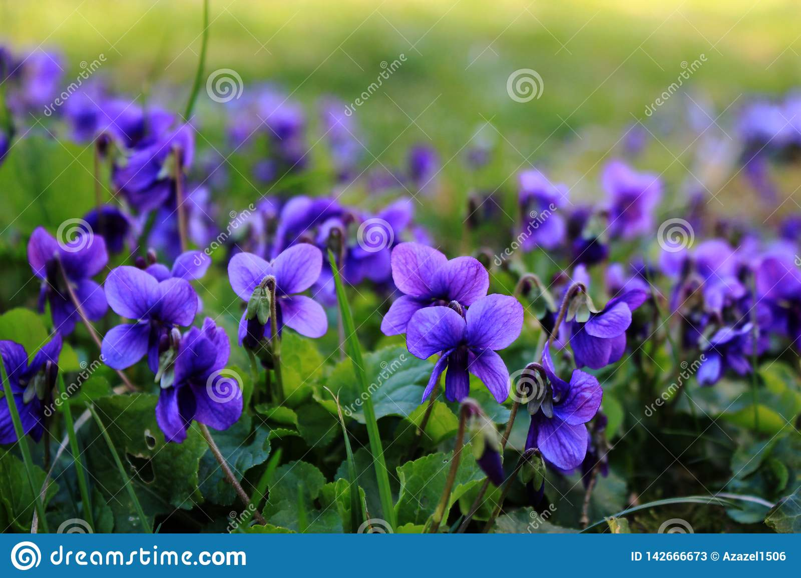 bright purple flowers on the grass