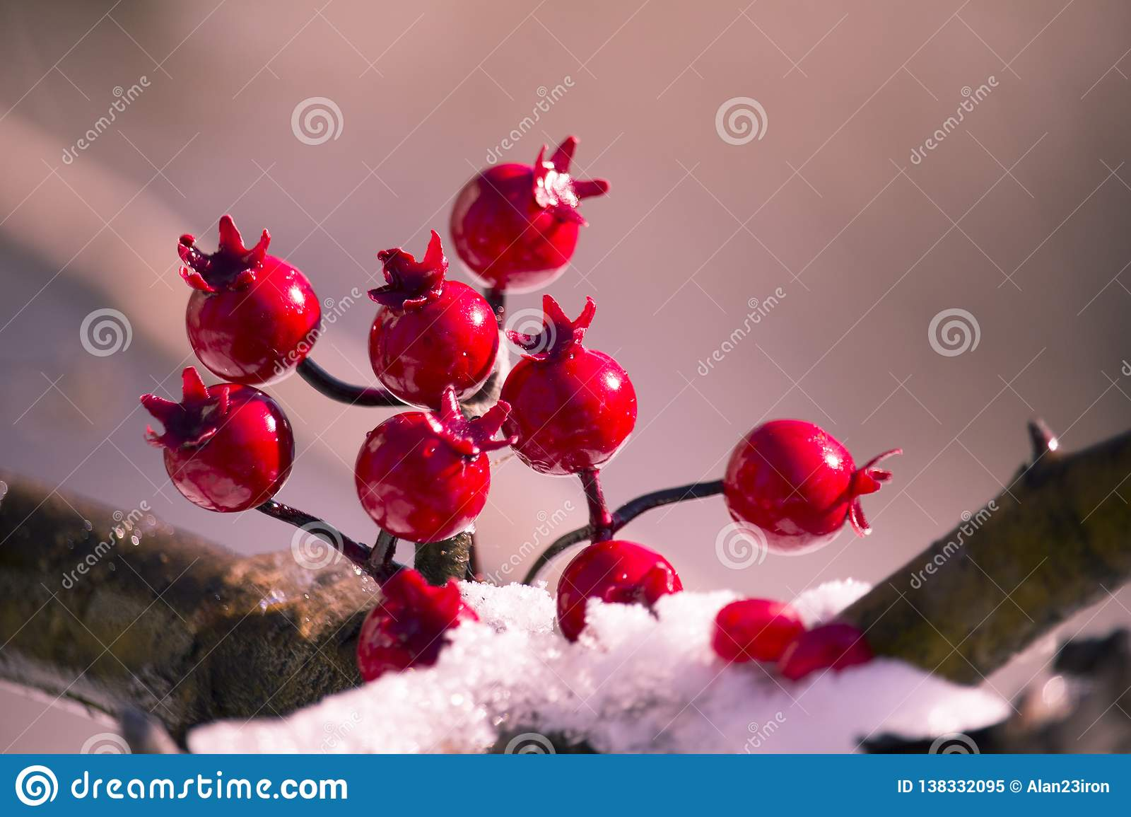 bright red berries on a snow covered branch