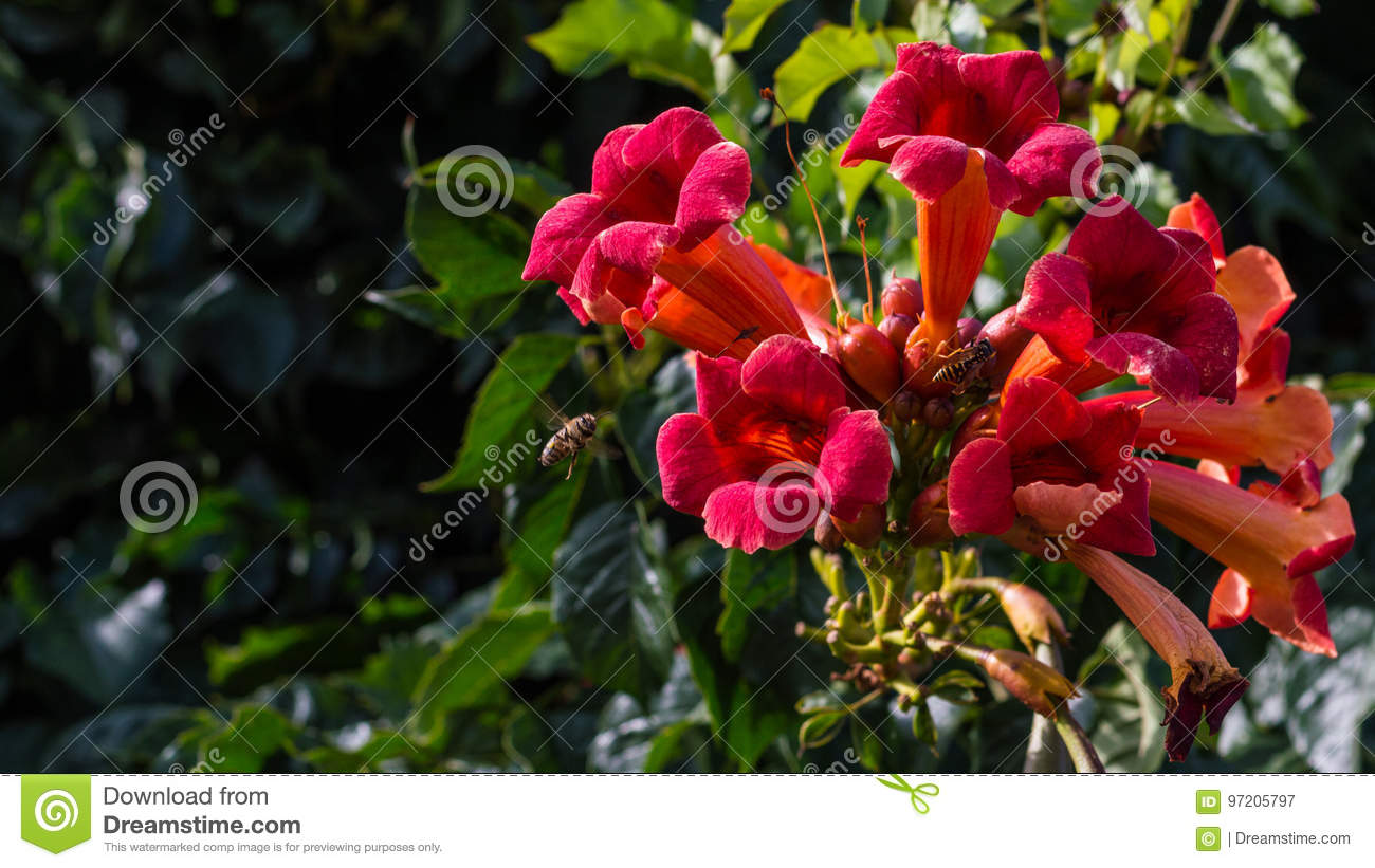 Bright Red Colored Flowers With Insects Stock Image - Image of macro ...