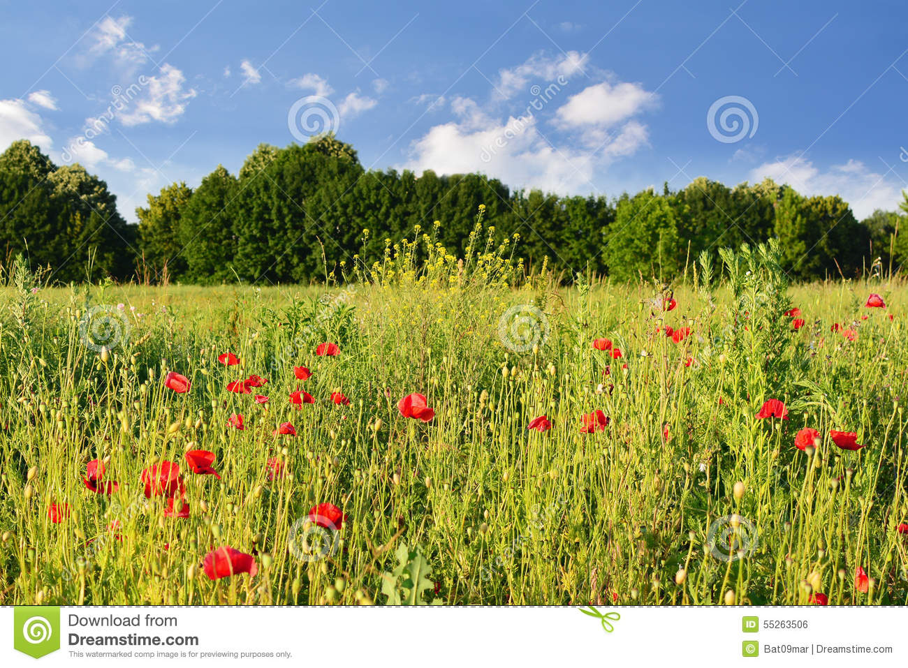 bright red flowers field - photo #1