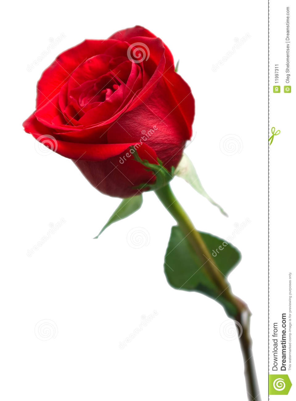 Beautiful Flowers Roses Red