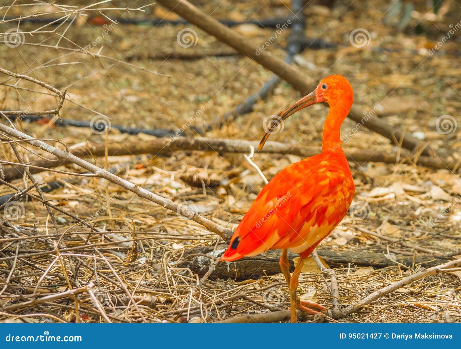 Bright birds of Crimea