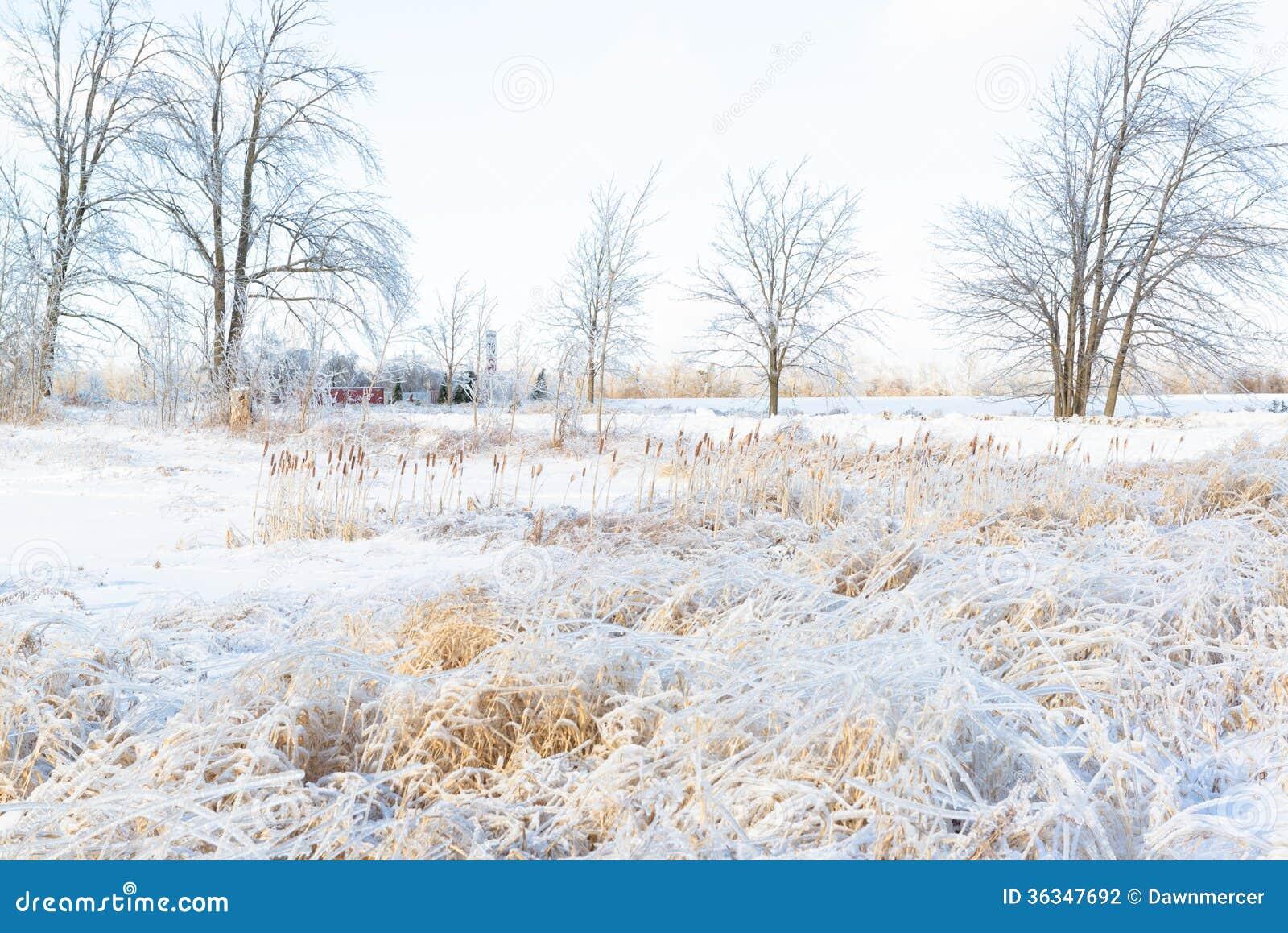 Christmas Tree Farm Prices