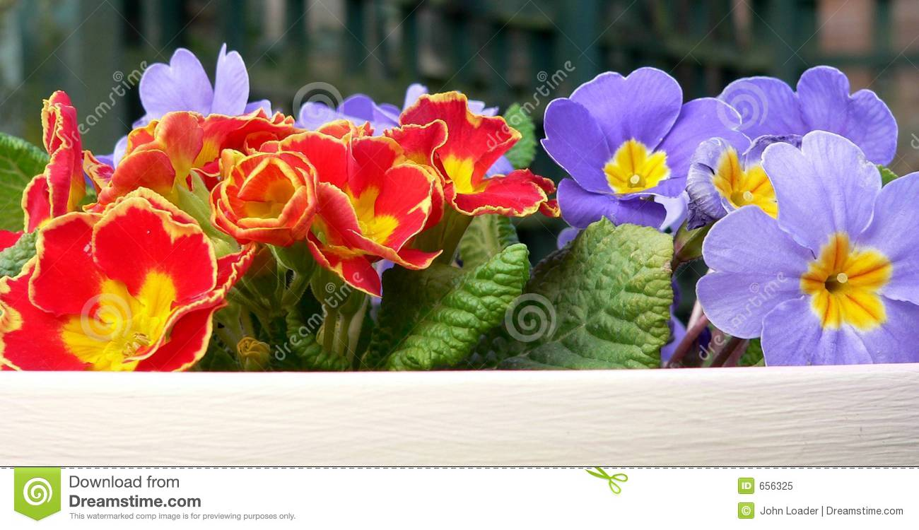 Bright Spring Flowers Stock Image Image Of Potted Leaves 656325
