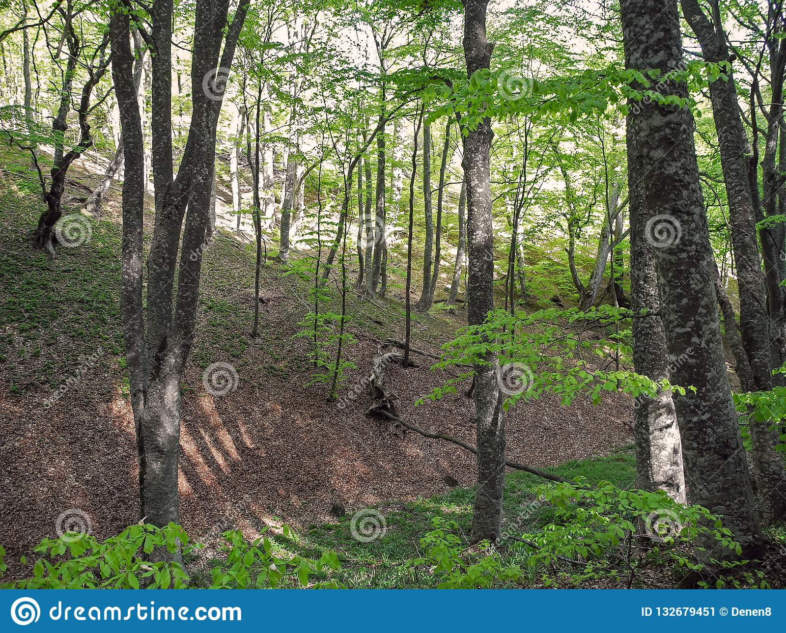 Bright spring forest on mountain slope. Crimean mountains