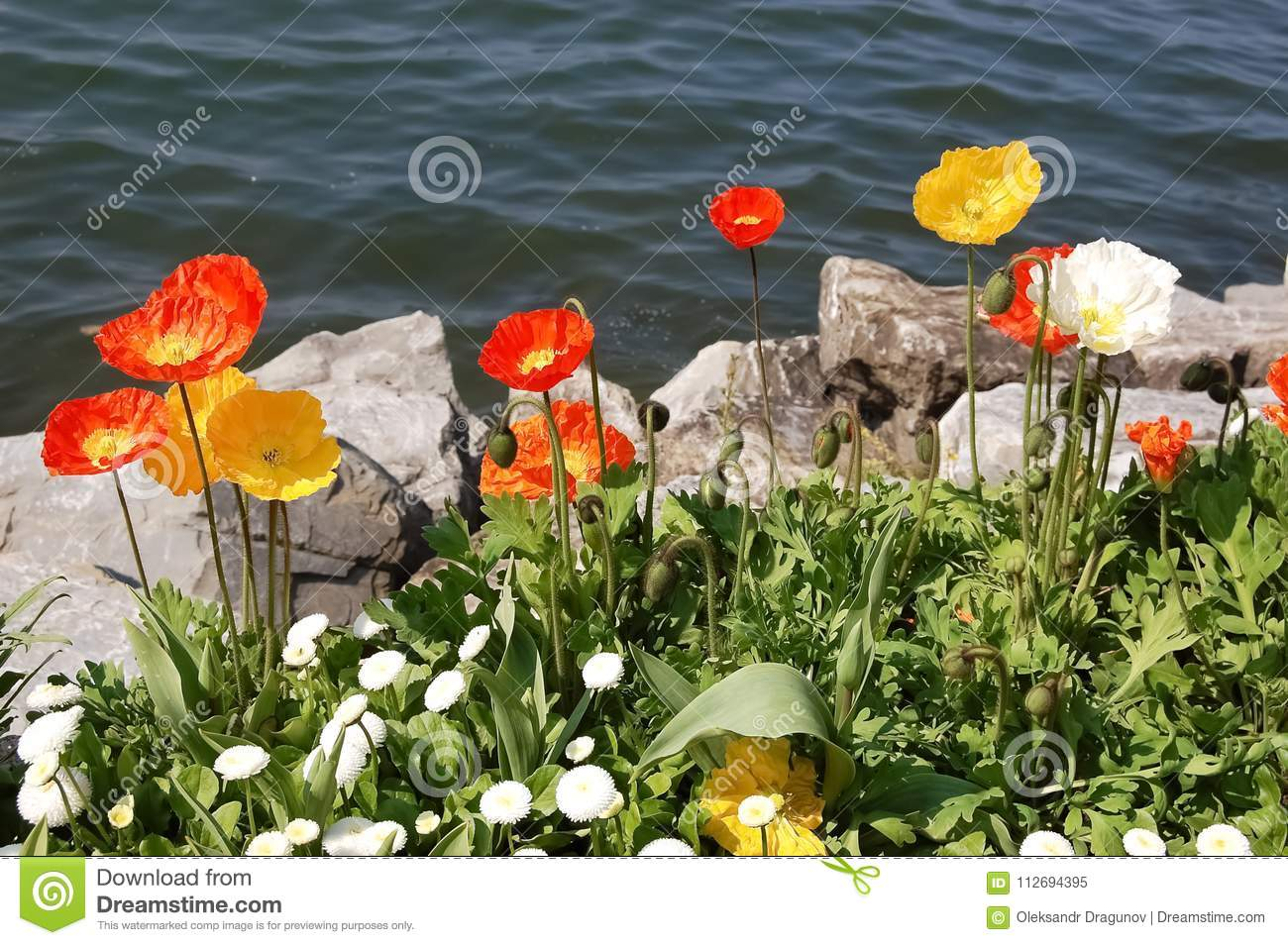 Bright Spring Red And Yellow Flowers By The Lake Stock Image