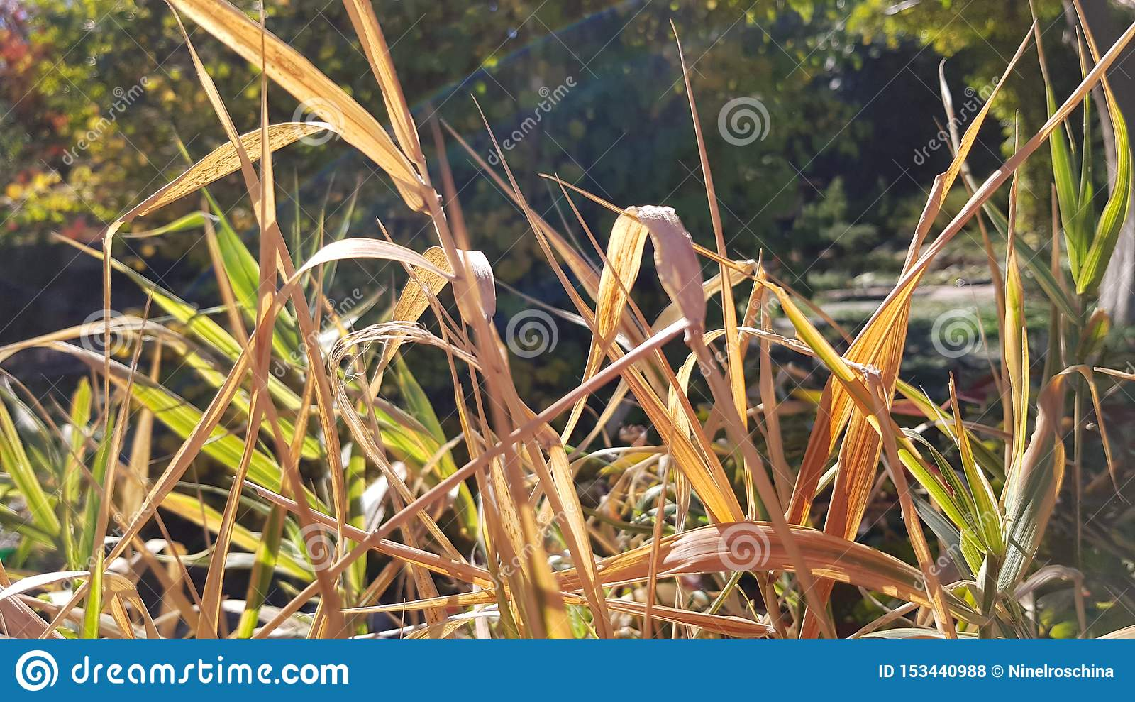 Bright Sunlight On Colorful Grass Bushes Of Garden Plants Stock