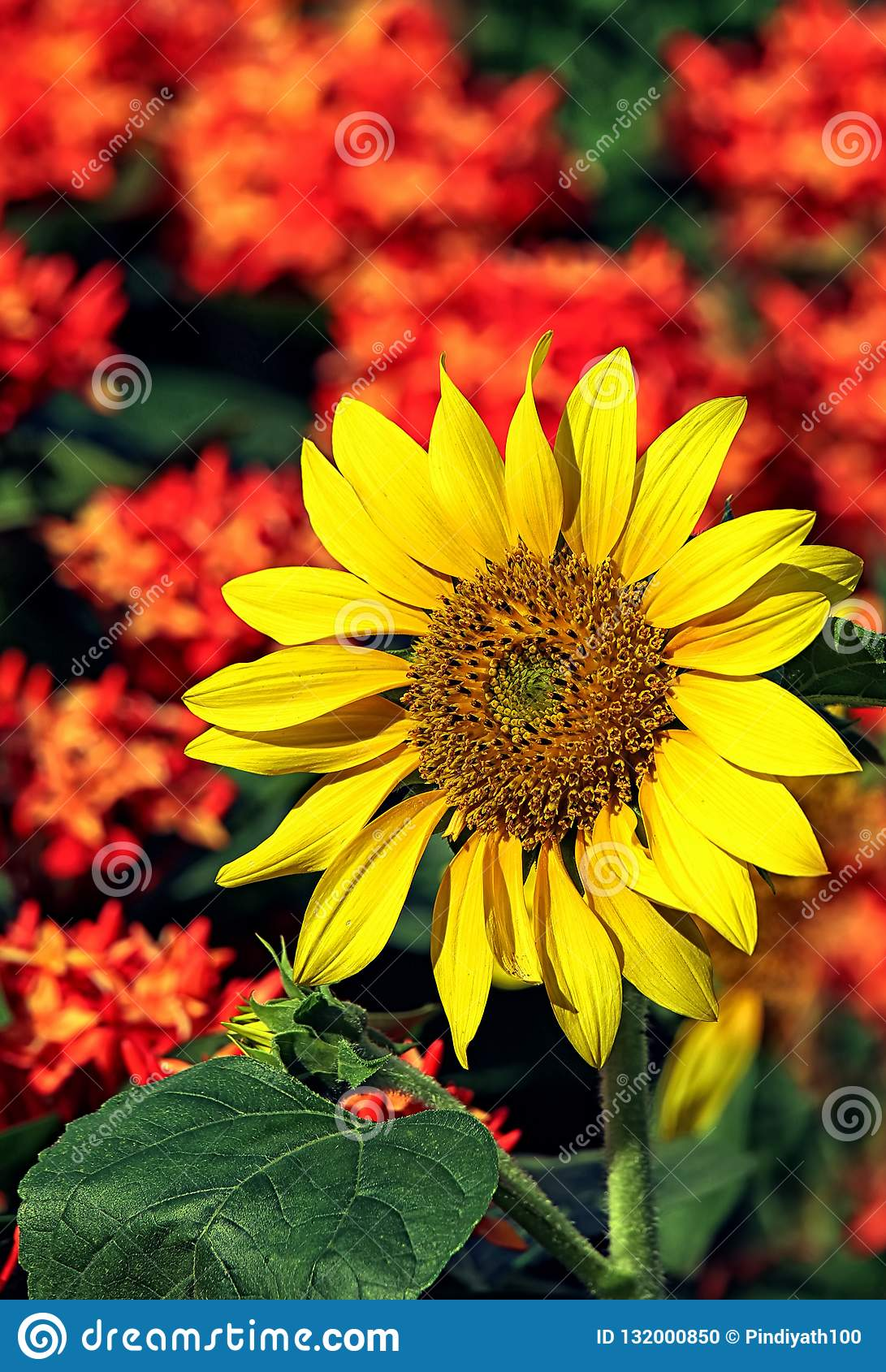Bright tropical sunflower
