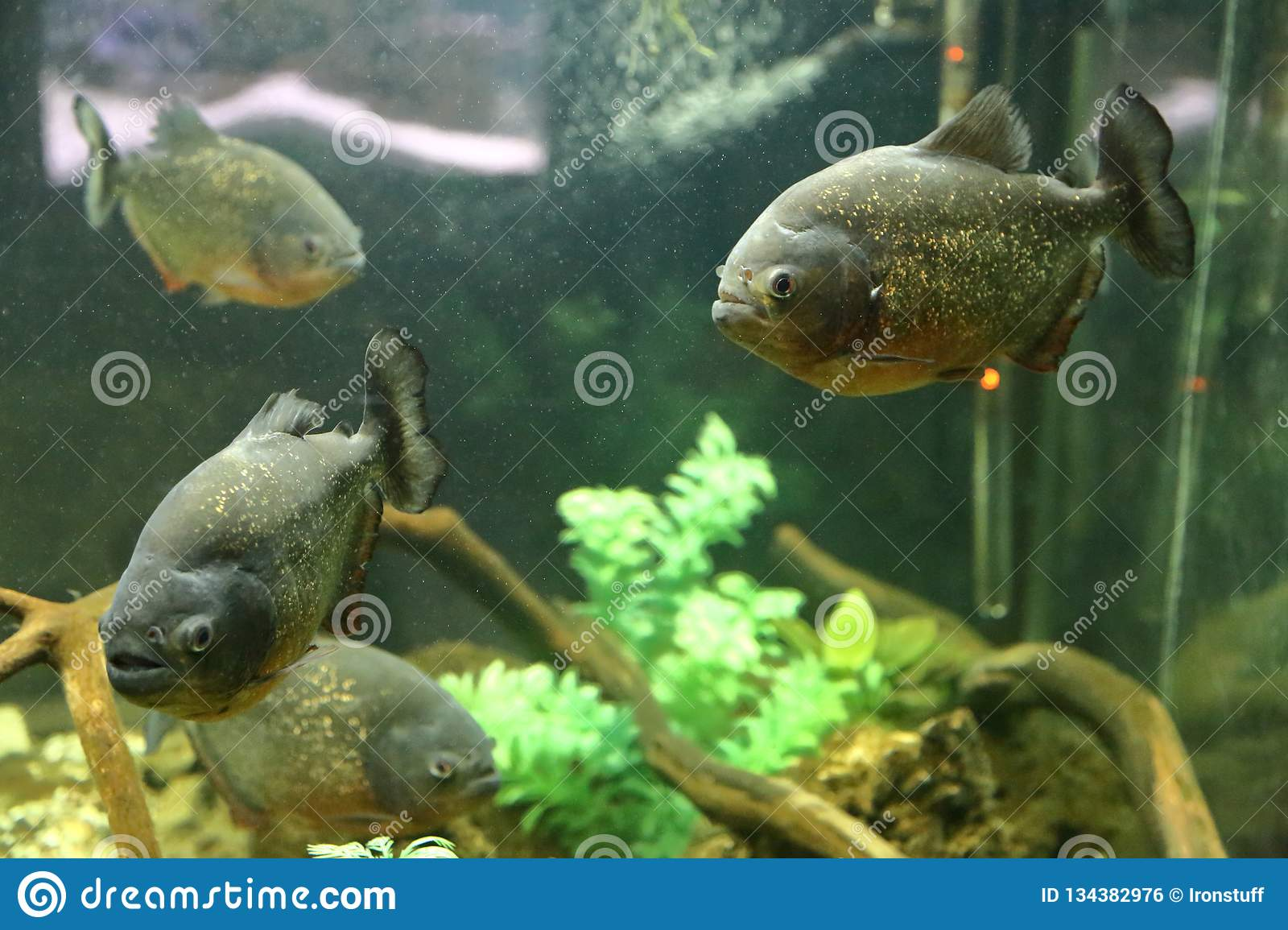 The Idea Of Home Aquarium Decoration Stock Photo Image Of