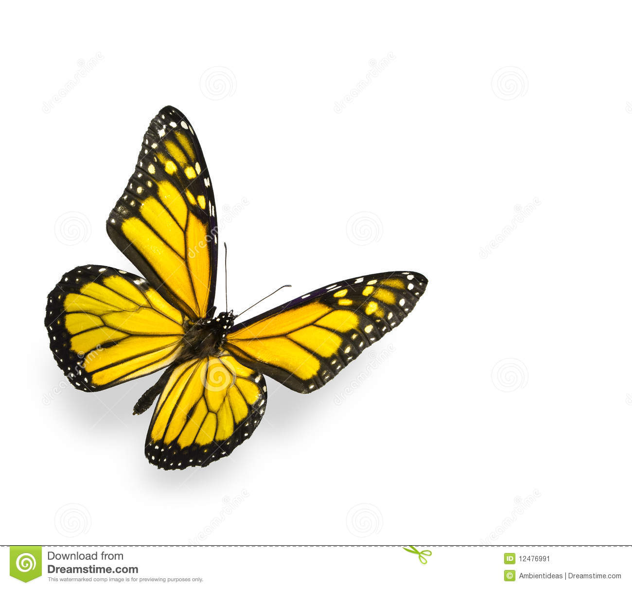butterfly on yellow color - photo #9