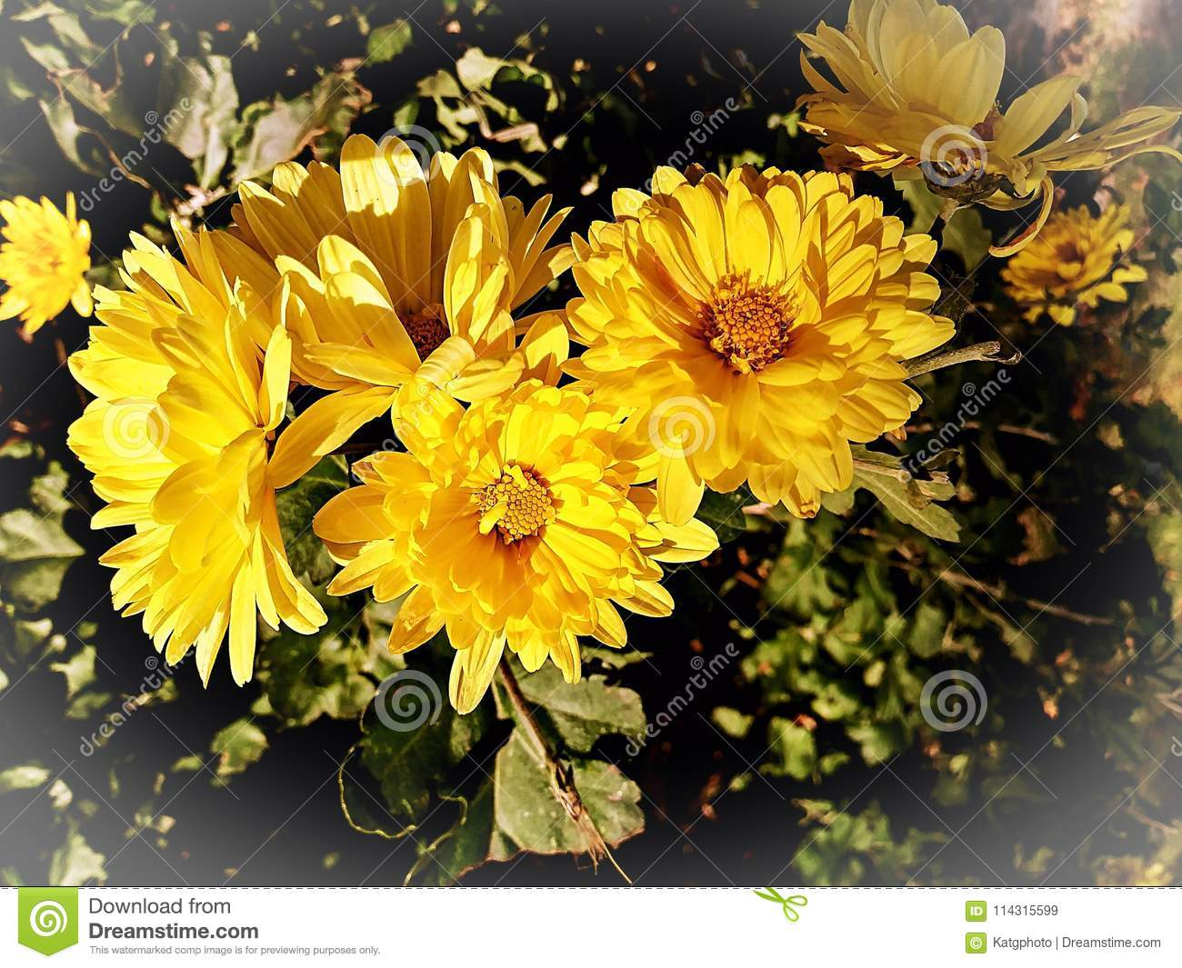 Yellow Blossom Bouquet In A Green Leaf Background Stock Image