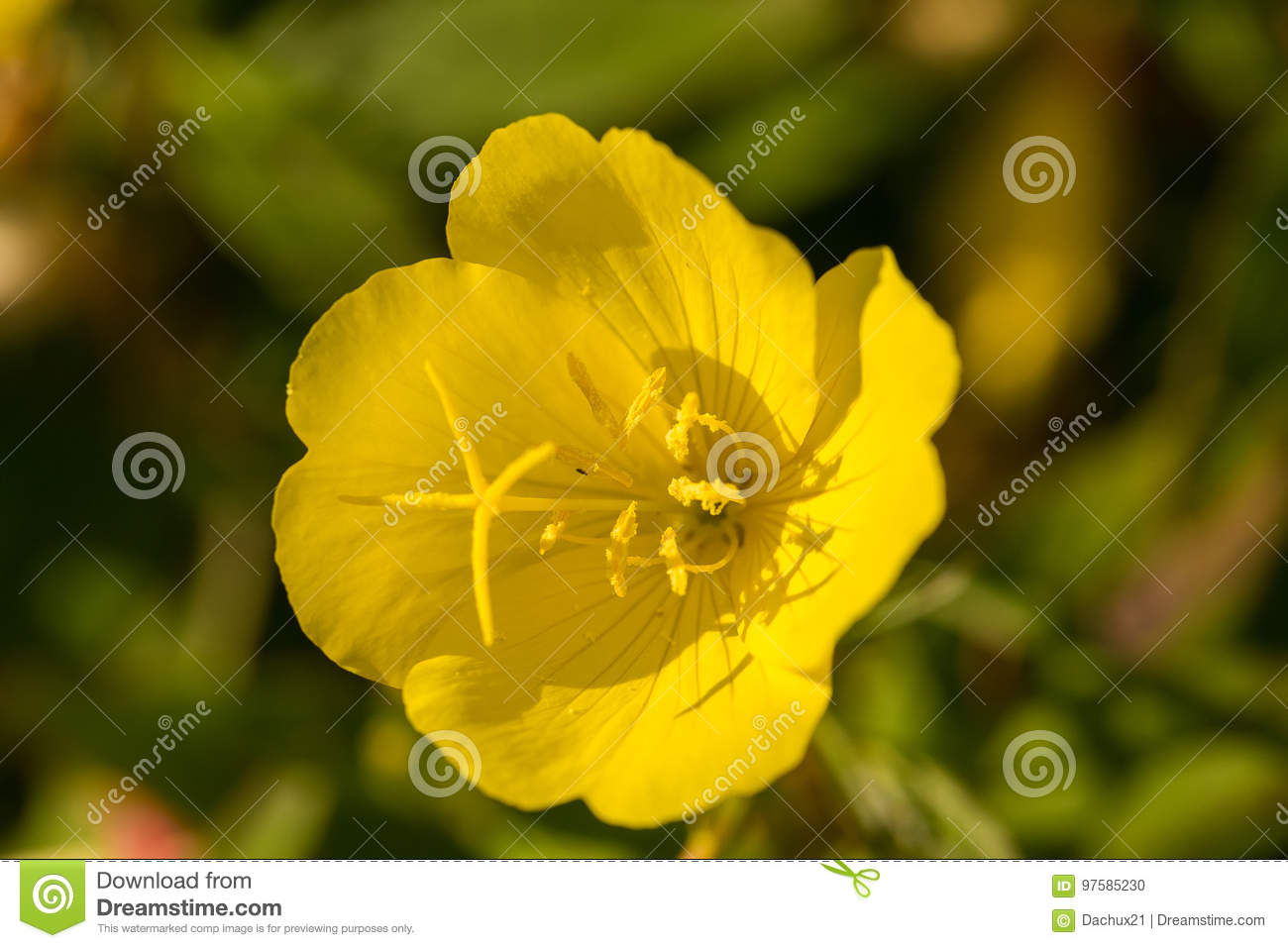Bright yellow flowers growing in the summer garden beautiful flower download bright yellow flowers growing in the summer garden beautiful flower closeup stock photo mightylinksfo