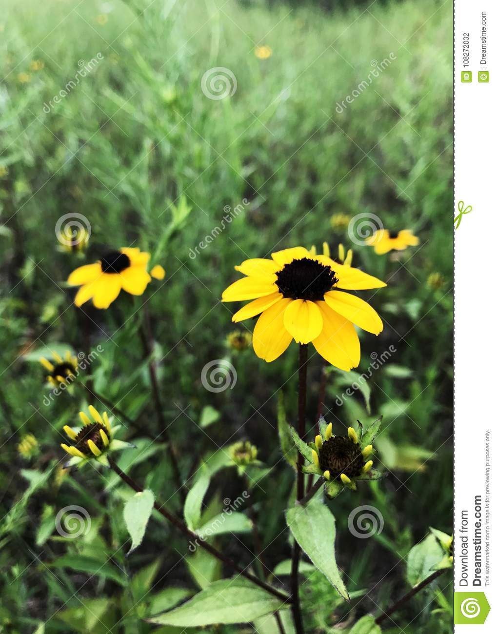 Yellow flowers standing tall in the long grass stock photo image yellow flowers standing tall in the long grass mightylinksfo