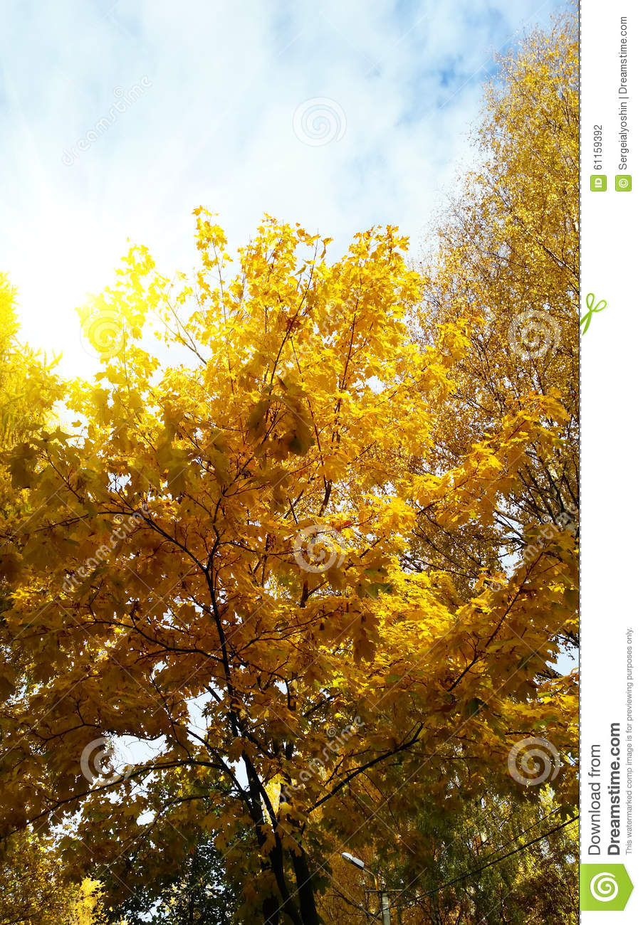 Brightly Colored Autumn Leaves Stock Photo